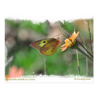 Butterly and Zinnia Postcard