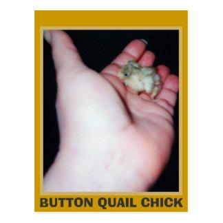 BUTTON QUAIL CHICK POSTCARD