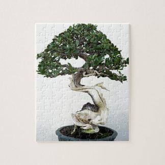 Buttonwood Bonsai Tree Jigsaw Puzzle