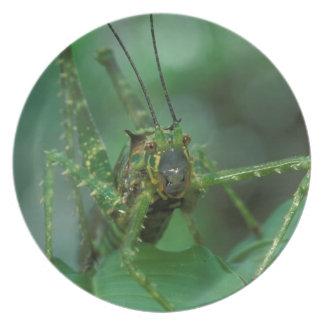 CA, Costa Rica, La Selva Biological Station, Plate