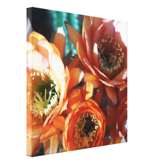 Cactus Blossoms Stretched Canvas Print