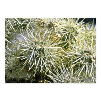 Cactus Closeup Custom Invite