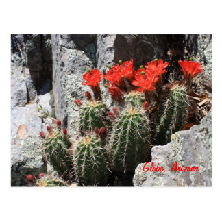 Cactus in the Rock Postcard
