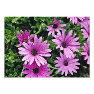 Cactus Osteospermum flowers Custom Announcement