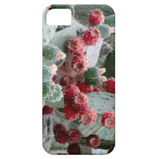 Cactus photo iPhone SE + iPhone 5/5S Barely There iPhone 5 Case