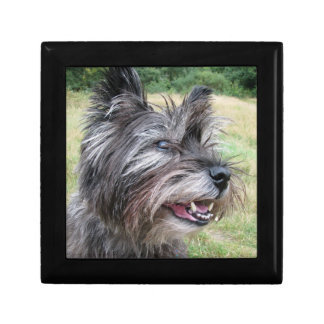 Cairn Terrier dog gift box jewelry box trinket box