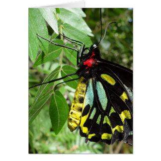 Cairns Birdwing Butterfly Notecard Note Card