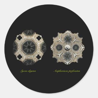 Calcispongiae Classic Round Sticker