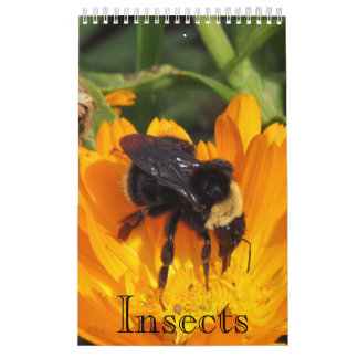 Calendar - Insects (sgl. pg.)