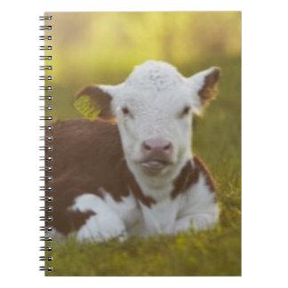 Calf Resting Notebook