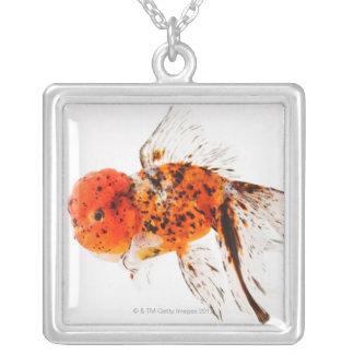 Calico lionhead goldfish (Carassius auratus) Silver Plated Necklace