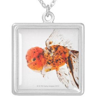 Calico lionhead goldfish (Carassius auratus). Silver Plated Necklace