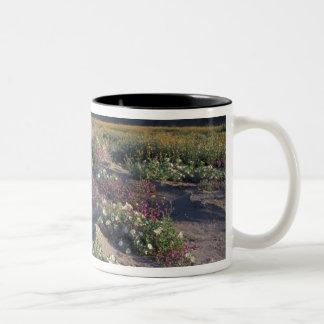 Califorinia, Anza-Borrego Desert SP, Sand Two-Tone Coffee Mug