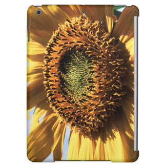 California, A Mammoth Sunflower (Helianthus) 1