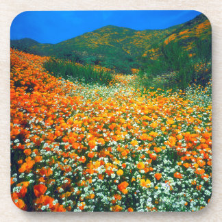 California Poppies and Popcorn wildflowers Coaster