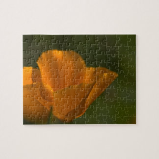 California Poppy Puzzle