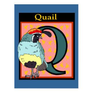 California Quail Bird Postcard