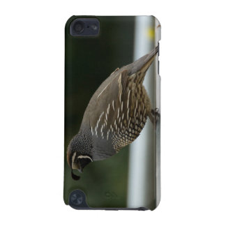 California Quail iPod Touch (5th Generation) Covers
