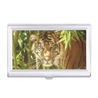 California, San Francisco Zoo, Sumatran Tiger Business Card Holder