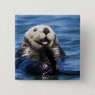 California Sea Otter Enhydra lutris) grooms 15 Cm Square Badge