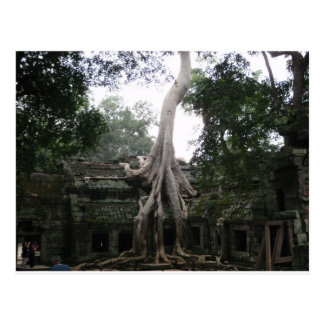 Cambodian Temple in the Jungle Postcard