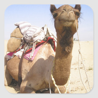 Camel Desert Middle East Peace Love Nature Destiny Square Sticker