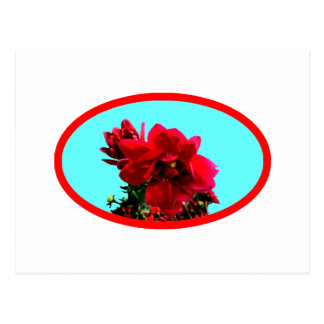 Camellia bg Cyan The MUSEUM Zazzle Gifts Postcards