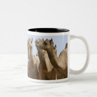 Camels in the desert, Pushkar, Rajasthan, India Two-Tone Coffee Mug