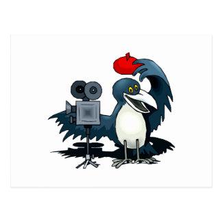 Cameraman Crow Postcard