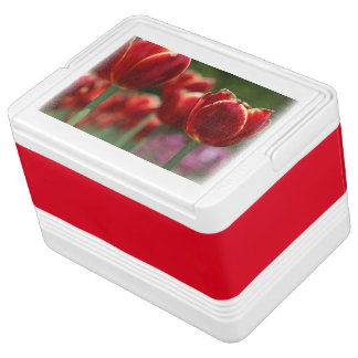 Can Cooler/Tulips Chilly Bin