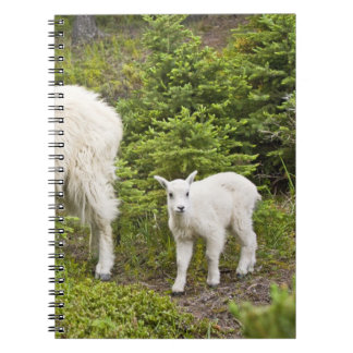 Canada, Alberta, Jasper National Park, Mountain 2 Notebooks