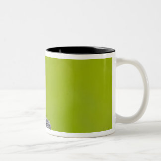 Canada, British Columbia near 2 Two-Tone Coffee Mug
