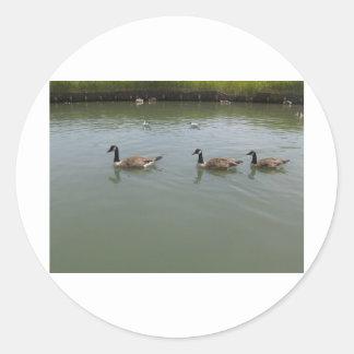 Canada Geese Classic Round Sticker