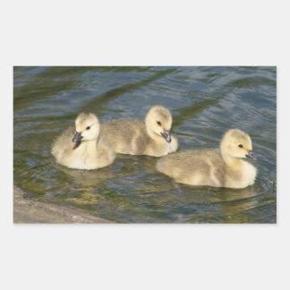 Canada Geese Goslings Rectangular Sticker