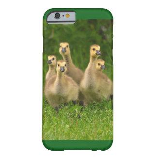 Canada goose cover