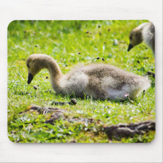 Canada Goose kids replica official - Canada Goose Mouse Pads | Zazzle.co.nz
