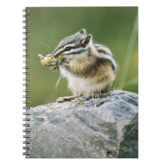 Canada, Jasper National Park, Yellow Pine Notebooks