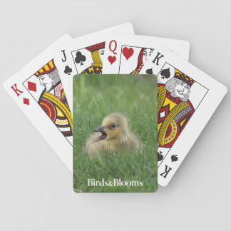 Canadian Goose Chick Playing Cards