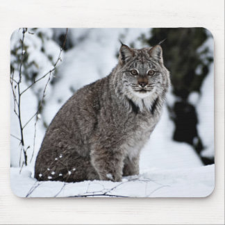 Canadian Lynx in the Snow Mouse Pad
