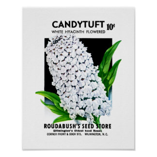 Candytuft Seed Packet Label Poster