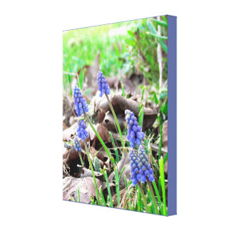 Canvas Print - Grape Hyacynth