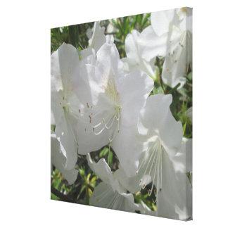 Canvas - Wrapped - White Azaleas Single Canvas Print