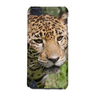 Captive jaguar in jungle enclosure 2 iPod touch (5th generation) case