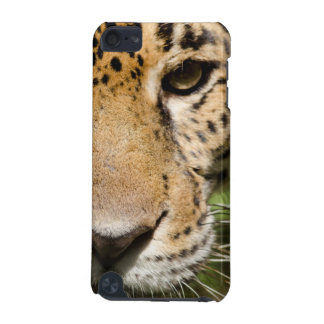 Captive jaguar in jungle enclosure iPod touch 5G cover