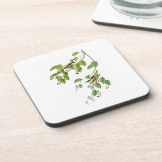 Carbonated Warbler John Audubon Birds of America Coaster