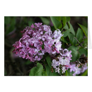 """Card, """"LILAC BLOSSOMS"""""""