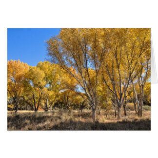 Card: Yellow Cottonwoods Card
