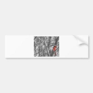 Cardinal in a tree bumper sticker