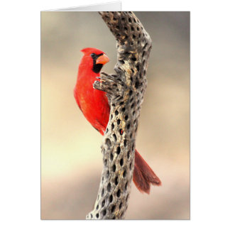 Cardinal on a Cholla Card