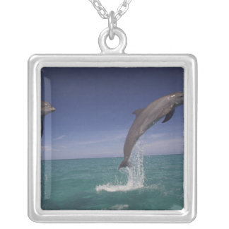 Caribbean, Bottlenose dolphins Tursiops 15 Silver Plated Necklace